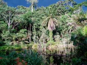 the real congo jungle