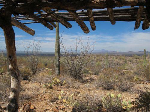 desert museum landscape