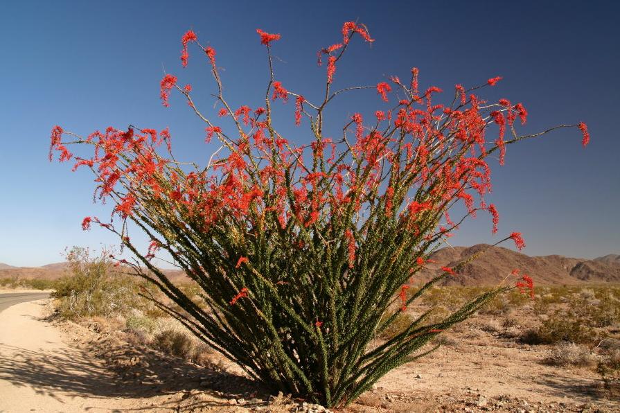 Six Weeks In The Desert Green Valley Arizona Fierce