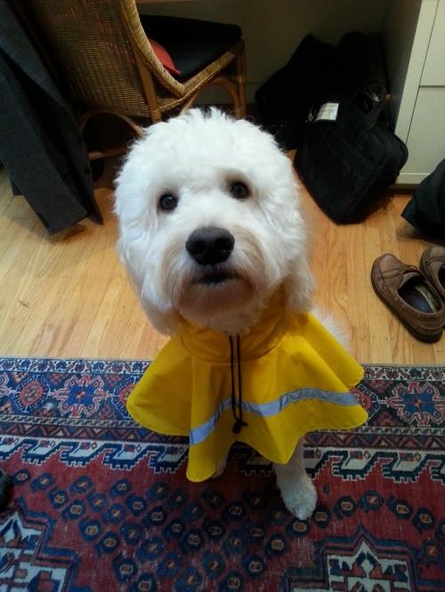 plaintive lefty in raincoat