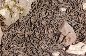 gross snakes