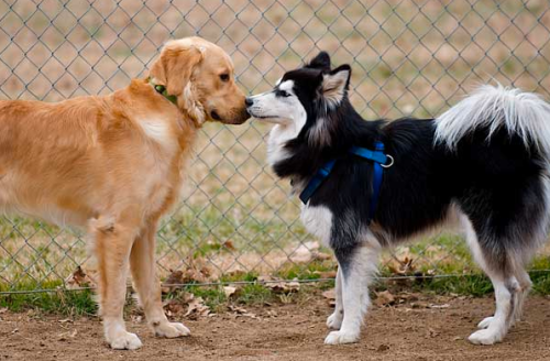 dogs sniffing each other