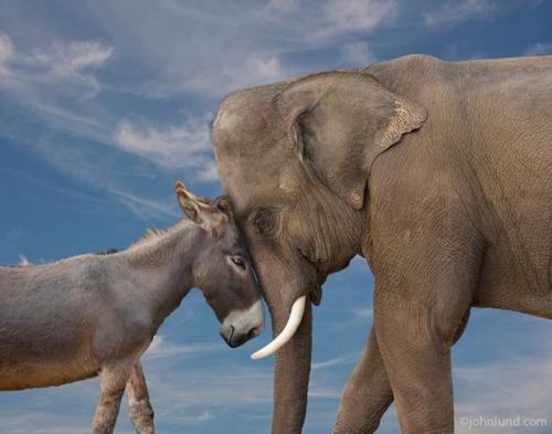 Image result for donkey elephant
